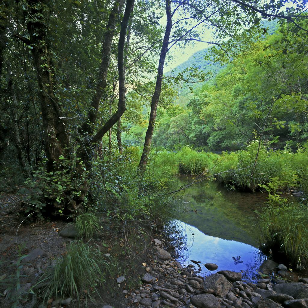 "<a href=""http://es.wikipedia.org/wiki/Fragas_del_Eume"">Fragas do Eume Galicia</a>"